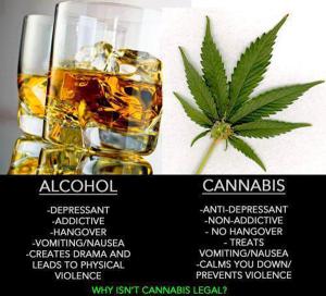florida cannabis vote