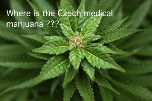 Czech medical marijuana