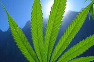cannabis is safe