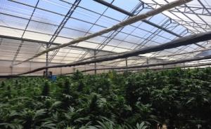 Holland cannabis law