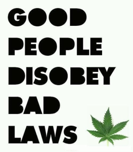 cannabis freedom