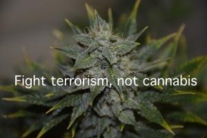 German cannabis