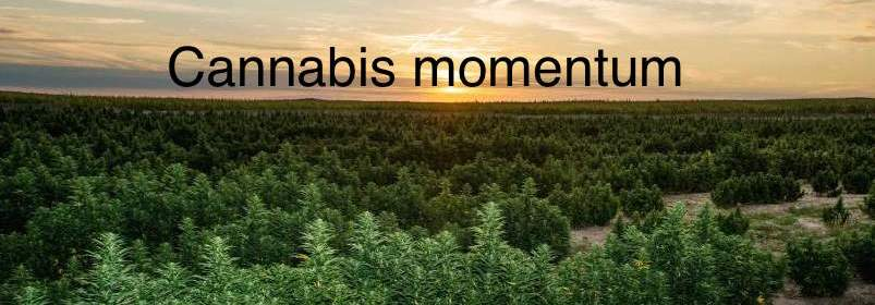 cannabis America