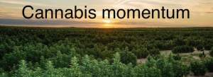 cannabis activism