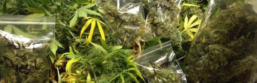 England cannabis