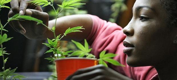 cannabis propaganda